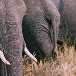 Kenia is de perfecte bestemming voor een avontuurlijke reis