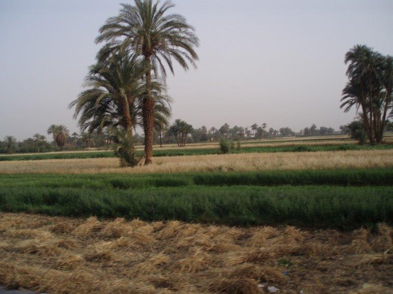 reis egypte 254